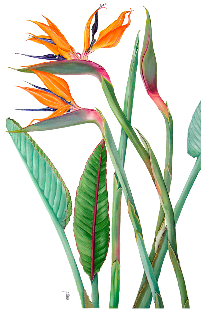 It's just a photo of Dramatic Bird Of Paradise Drawing