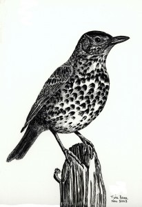 0020 Songthrush and Rusty Nail
