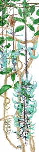 0701 Jade Vine With Bat