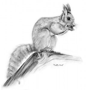 "0709 ""Tufty Nut"" - Red Squirrel"