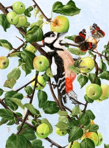 0710 Red Admirals and 'Woody' (Great spotted woodpecker)