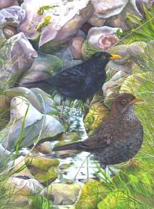 0711 The Three Snails (Blackbirds)