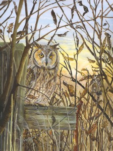 1105 Winter Leaves at Wicken Fen (Long Eared Owl) (Asio otus - previously: Strix otus)