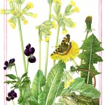 NS04 Nature's Gems: April Frog Cowslip Tortoiseshell