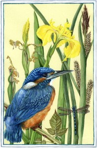 NS05 NATURE'S GEMS: May Kingfisher