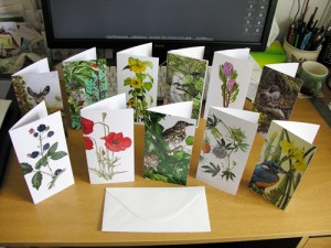 New Range: DL size Greetings Cards