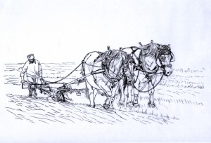 1518 The Art of Ploughing  2 (Suffolk Punch horses, Ploughing Championships 2013, Soham, Cambs)