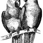 0601a: Parakeets logo for Le Paradis Restaurant (Duxford Lodge Hotel)