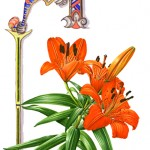 An Orange Lily adorned this letter (0809)