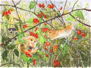 1508 Border Skirmish (Dormice in a Hedgerow)