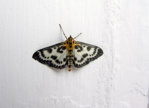 Beautiful Moth on the window side wall